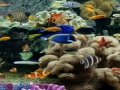 Gry Hidden World: Underwater forum - gry online